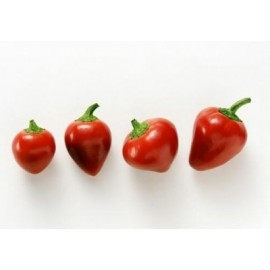 Cherry Peppers - Seed