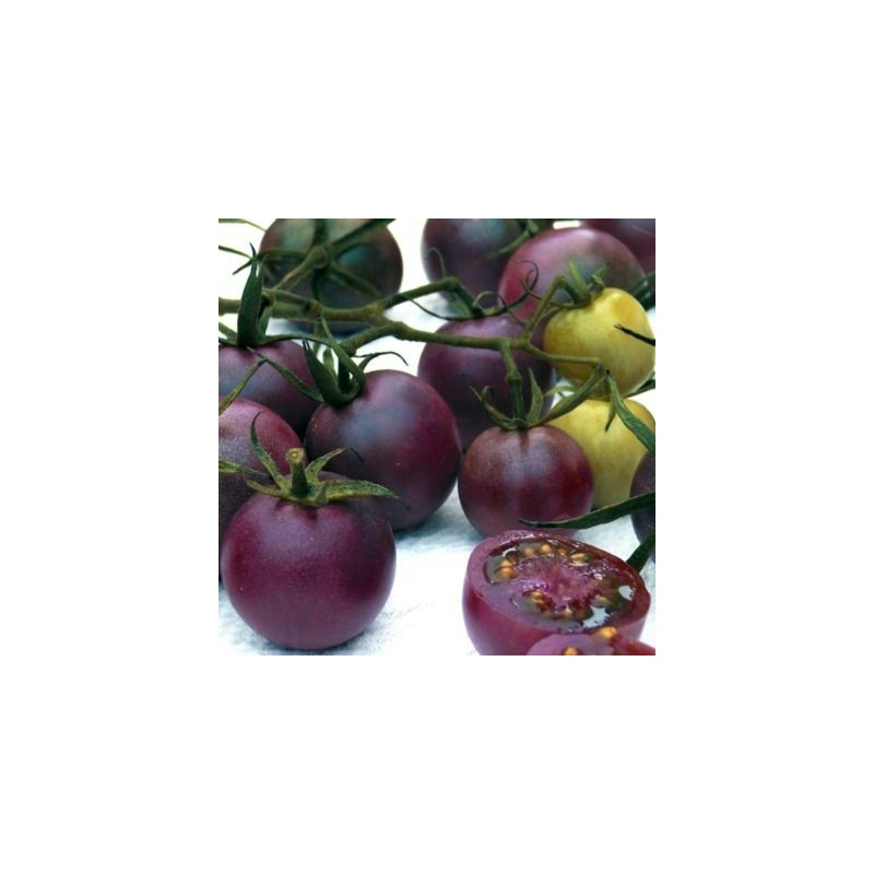Buy tomato seeds cherokee purple tomato plant tomato for How to grow cherry tomatoes from seeds