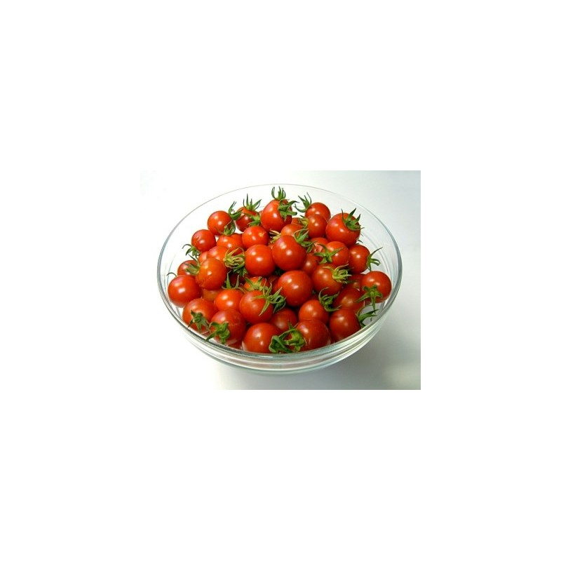 Cherry tomato seeds and plants grow patio princess for How to grow cherry tomatoes from seeds