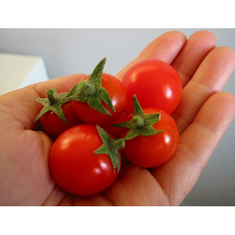 Cherry Tomatoes   Seeds