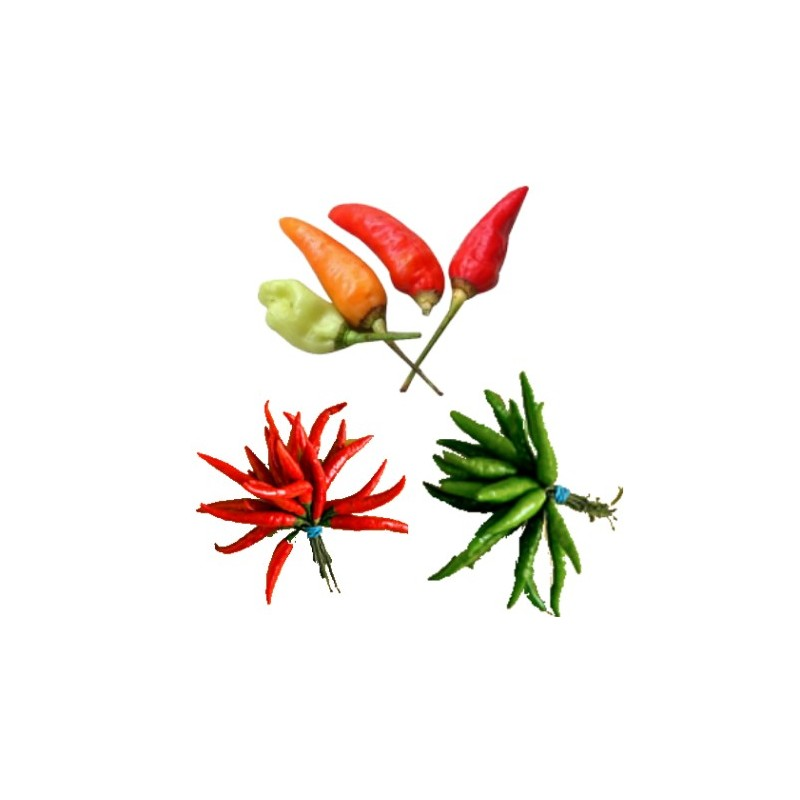 African Bird's Eye Chili, buy bird's eye chili pepper
