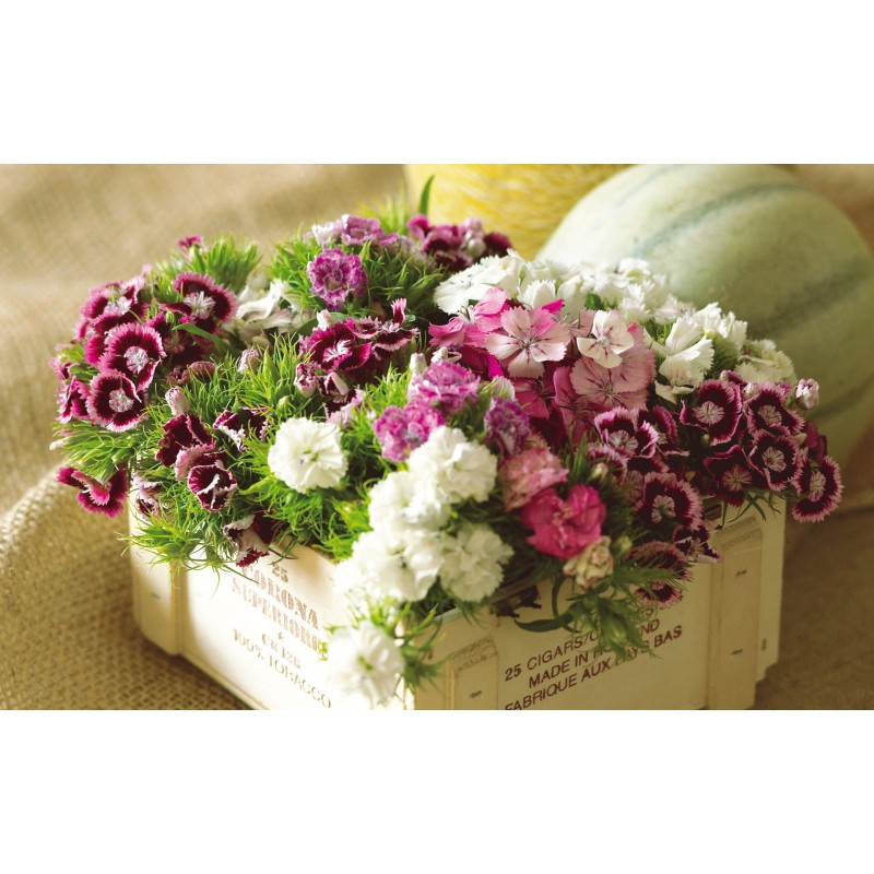 http://www.seedarea.com/3194-thickbox_default/dianthus-seeds.jpg
