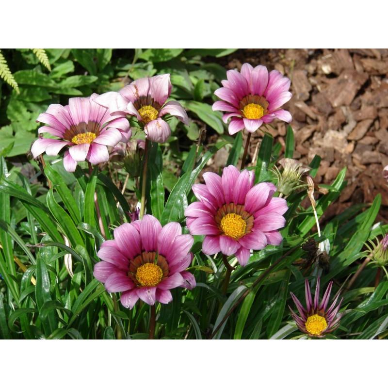 Как узнать название цветов по фото садовых