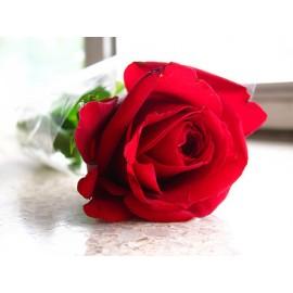 Rose - Seeds