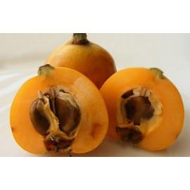 Loquat Tree - Seeds