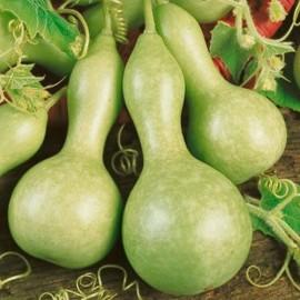Lagenaria - Seeds
