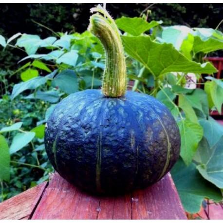 Japanese Pumpkin - Seeds