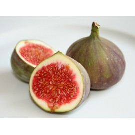 African Fig Tree / Ficus carica- Seeds