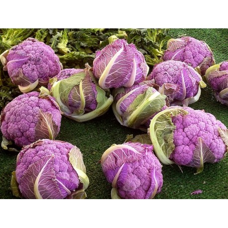 Purple Cauliflower - Seeds