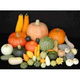 Ornamental gourd / Pumpkin - Seeds