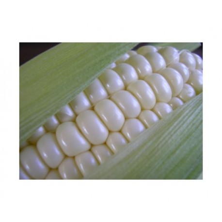 Sweet Corn (white) - Seeds