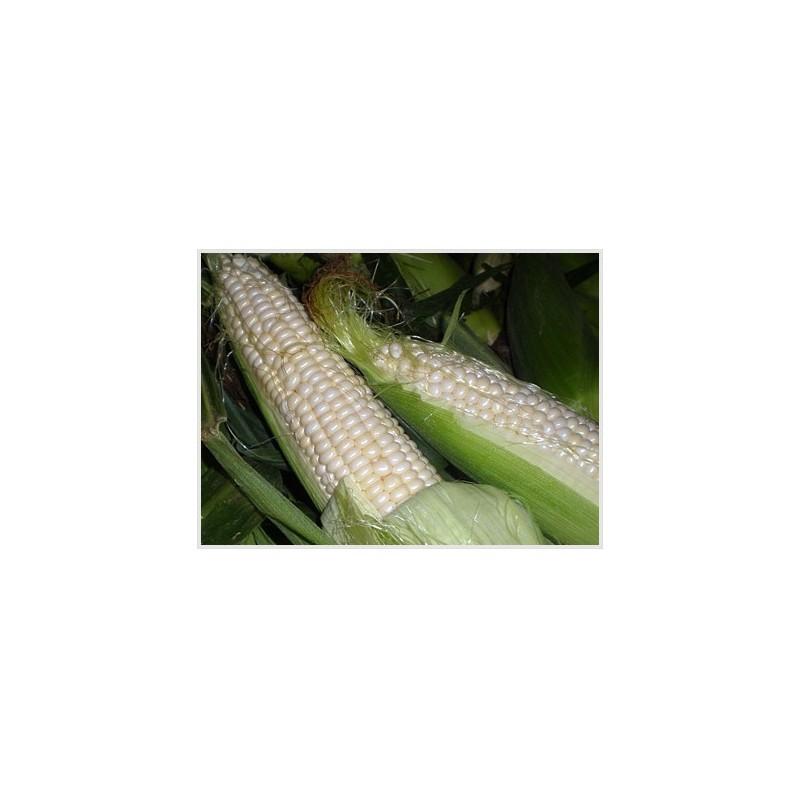 Sweet Corn (white) - Seeds - SeedArea