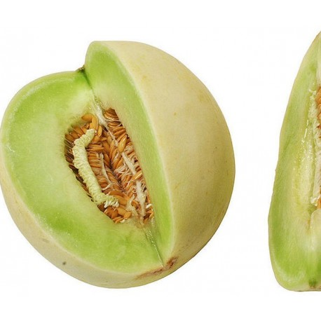 Honeydew Melon - Seeds