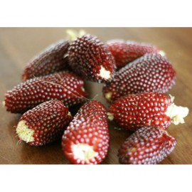 Strawberry Popcorn (Red) - Seeds