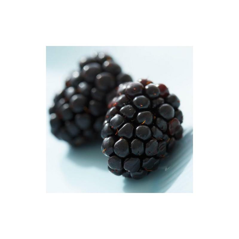 Blackberry Seeds Seedarea