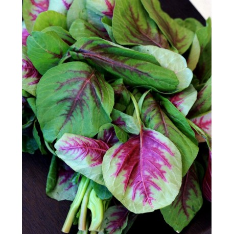 Amaranth Red / Chinese Spinach - Seeds