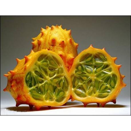Cucumber (Ornamental) - Seeds