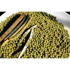 Mung Beans - Seeds