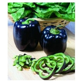 Black/Deep Purple Pepper - Seeds