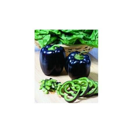 Black/Deep Purple Pepper - Seeds