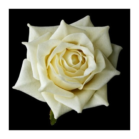 White Rose 100g Approx.4000 Seeds