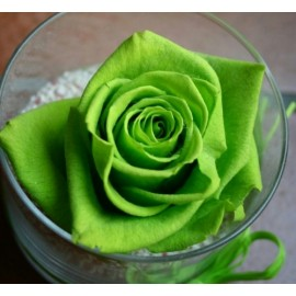 Green Rose 100g Approx.5000 Seeds