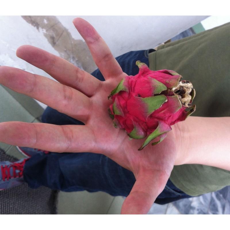 mini dragon fruit red seeds