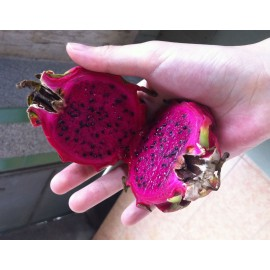 Mini Dragon Fruit (Red) - Seeds