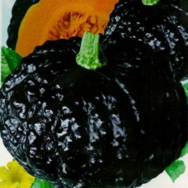 Japanese Pumpkin 100g Approx.430 Seeds
