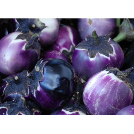 Eggplant (Small, Purple, Round) 100g Approx.20000 Seeds
