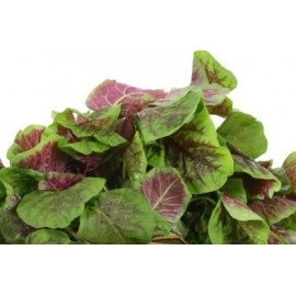 Amaranth Red / Chinese Spinach 100g Approx.138,000 Seeds