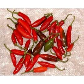 Capsicum annuum Chili Serrano 100g Approx.28,500 Seeds