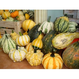 Ornamental gourd / Pumpkin 100g Approx.1150 Seeds