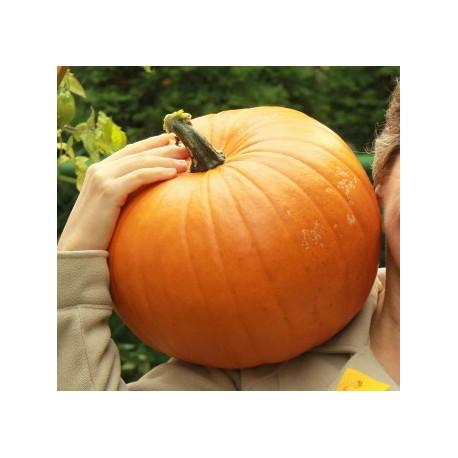 Cucurbita / Giant Pumpkin 100g Approx.3500 Seeds