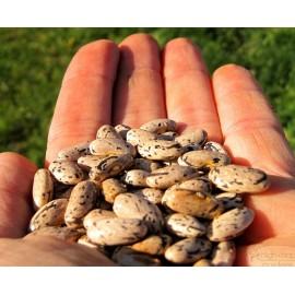 Rattlesnake Bean 100g Approx.260 Seeds
