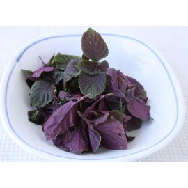 Perilla (purple red) - Seeds